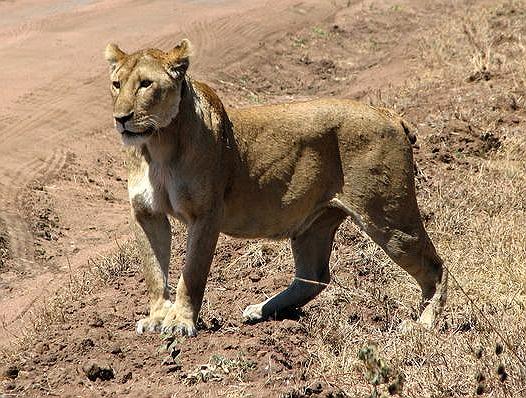 Lioness Moms Fight Back | Pat Bean's blog