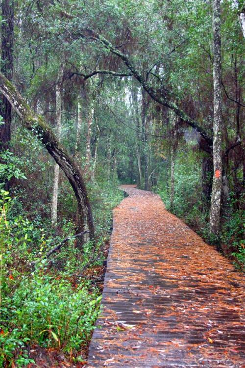 This trail at Laura Walker Park called to me