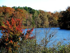 Pin Oak Lake, Natchz Trace State Resort Park, Tennessee. -- Photo by Pat Bean