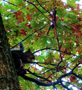 One of the many squirrels that delighted me and taunted Pepper during this journey. --  Photo by Pat Bean
