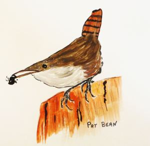 A canyon wren that I saw, and painted, in Zion National Park.