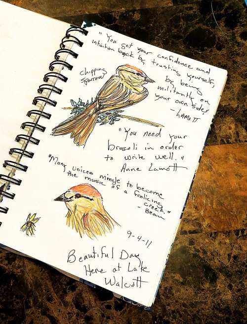 A page from one of my sketch books of a chipping sparrow.  I promised to share my art occasionally and this just seemed like a good day to do it.