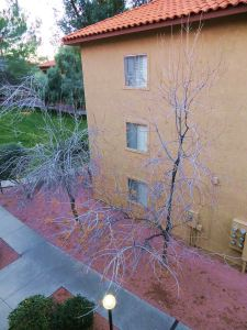 My third-floor apartment lets me live at tree-top level It's the closest thing I could find to living in a tree house, which is something I would still like to do. These two winter-naked trees are visible from my front-room balcony. I'm eagerly awaiting them to change into spring garments, and watching them do so is one of the joys I look forward to in coming days. -- Photo by Pat Bean