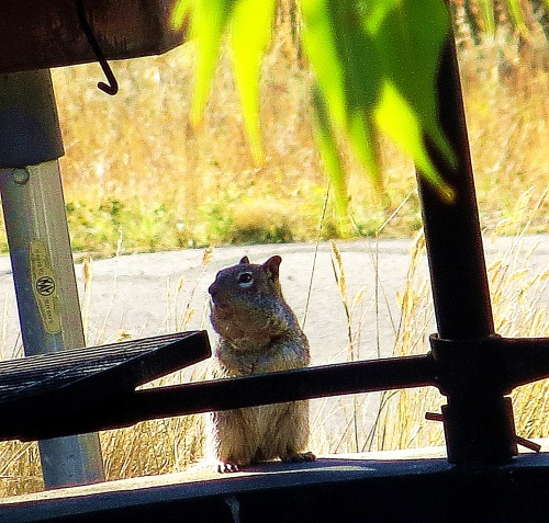 I dawdled to watch squirrels at a campground. == Photo by Pat Bean