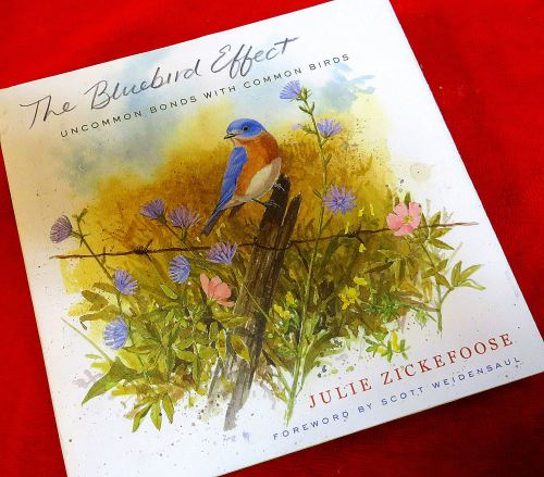 """The Bluebird Effect by Julie Zickefoose"