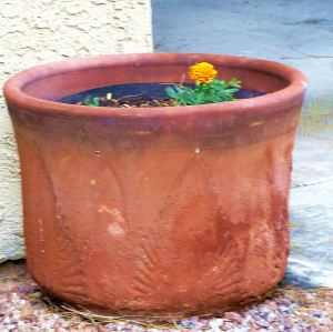 This one little flower in a big pot seems awfully lonely/ == Photo by Pat Bean