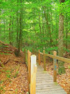 """Across bridges and into the woods, just like in """"Shadows and Light."""" -- Photo by Pat Bean"""