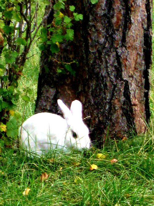 Free roaming bunny -- Photo by Pat Bean