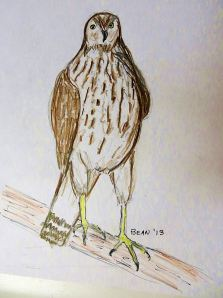 And a quick sketch of one of the less-colorful juveniles now flying around my apartment complex. --  Pat Bean sketch