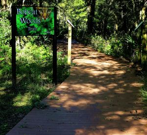 The magical path leading into Bpbcat Woods at San Bernard National Wildlife Refuge. -- Photo by Pat Bean