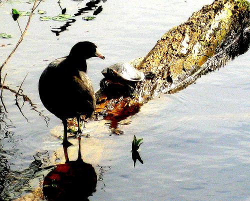 I'm thankful that this old coot still has a zest for life and a curiosity about it as well.  -- Photo by Pat Bean