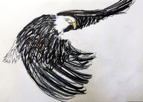 Fly free and high in the New Year. --  Quick sketch of bald eagle doing just that by Pat Bean