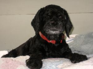 My beloved Maggie, who spent the first eight years with me in Gypsy Lee. She is still missed
