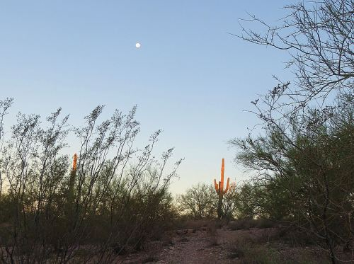 One of the best things about taking Pepper for an early morning walk is getting to see the sun come up over the desert. -- Photo by Pat Bean