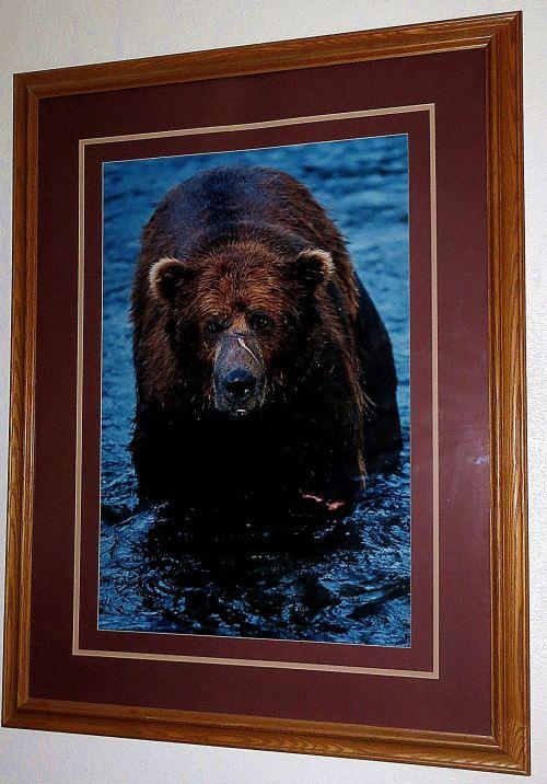 Bubba Bear: He's a survivor, and so am I.