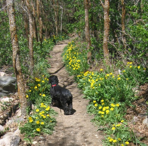 Of course when I hiked the benches of Mount Ogden in Utah, I wasn't exactly along. I always had Peaches or Maggie with me. Peaches would have torn the limbs off of anyone who tried to harm me. But, Maggie, who is shown here, would have been hiding behind me for protection.  -- Photo by Pat Bean