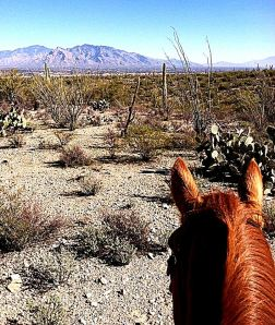This is a photo my daughter shot while riding alone in the desert. -- Photo by T.C. Ornelas