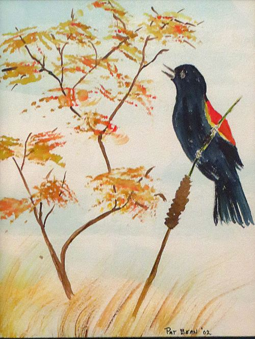 Red-winged blackbird sketch I made after seeing this bird during an Antelope Island outing. -- Illustration by Pat Bean