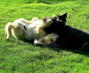 They like to wrestle, too.-- photo by Pat Bean