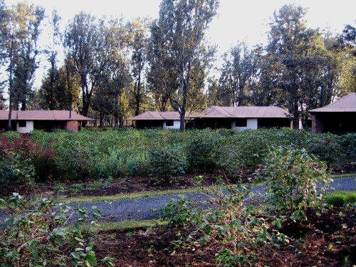 This is a coffee plantation in Arusha, Tanzanika, where I spent a night in 2007. The guest houses were scattered among the coffee plants. The experience turned me on to African coffee. -- Photo by Pat Bean