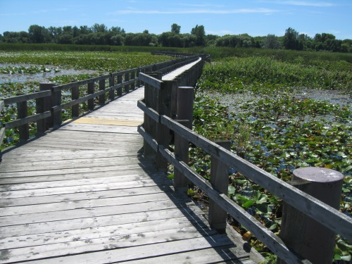 There's noting better than a nice walk through a scenic landscape, such as this boardwalk loop at Point Pelee National Park in Canada. Some of my best ideas come to me on such walks. --  Photo by Pat Bean