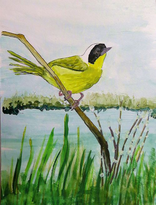 This singer is a common yellowthroat that I usually come across in marshy areas near water, which hums its own melodies as it swishes against a bank or over rocks. -- Art by Pat Bean