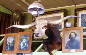 I'm not sure what the Texas longhorn was doing in Arizona, either. -- Photo by Pat Bean