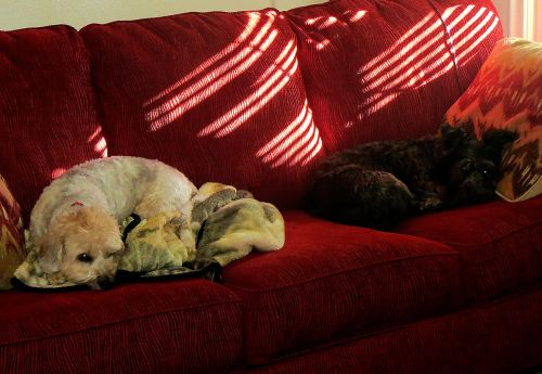 Two couch potatoes. -- Photo by Pat Bean