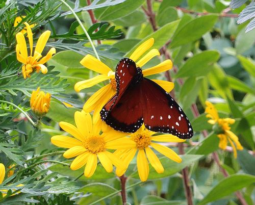 I'm addicted to books like butterflies are addicted to flowers ... -- Photo by Pat Bean