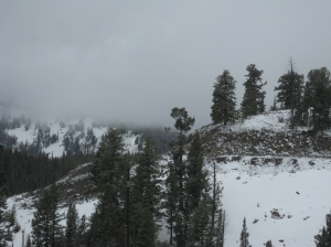 Another snowy, foggy day, although this photo was taken while driving over Galena Pass in Idaho. -- Photo by Pat Bean