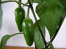 Life is like a jar of jalapenos. What you do today might burn you tomorrow. -- Wikimedia photo