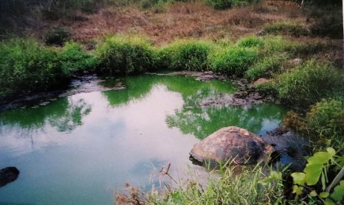 Another thing that travel writer Catherine Watson share is that we've both visited the Galapagos and were fascinated by the wildlife, like this tortoise I watched on Santa Cruz Island. == Photo by Pat Bean