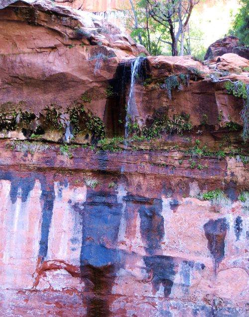 The trail led beside and beneath the waterfalls. I do so love Zion. -- Photo by Pat Bean