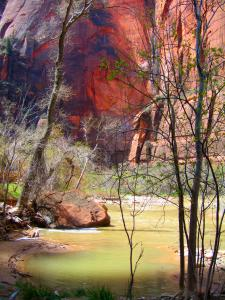 The Virgin River in Zion National Park. I remember when this river tore out the Zion Canyon Road after a heavy rain. The time is fondly remembered as the camping trip from hell. -- Photo by Pat Bean
