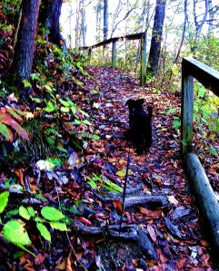 Along with sight-seeing and pondering as we drove the Blue Ridge Parkway, Pepper (who joined me after Maggie died for the last eight months of my full-time RV travels) and I did a a lot of exploring of the parkway's many trails. -- Photo by Pat Bean