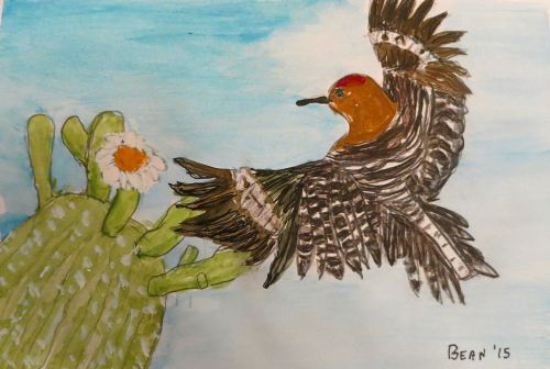 This was a carefully done illustration of a gila woodpecker  I did to go with an Audubon birding blog.