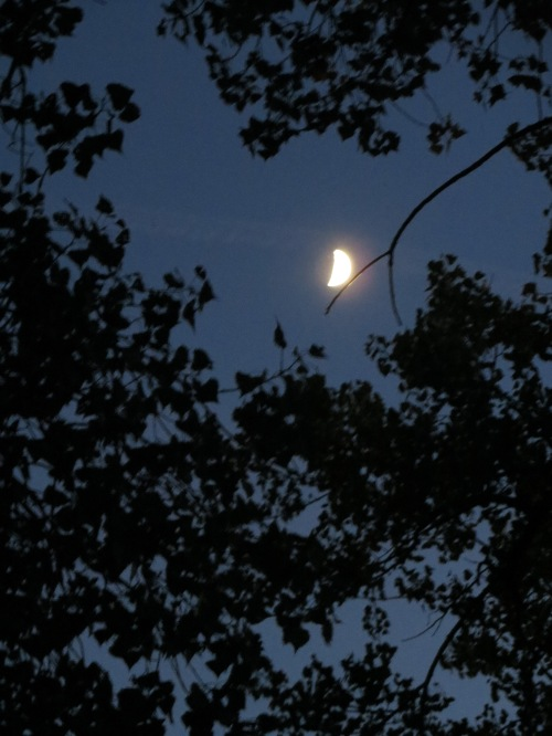 Writing feels like a sliver of silver moon that sheds light on what the dark tries to hide. within the world and within ourselves. Things may still be hazy, but never again invisible. -- Photo by Pat Bean .