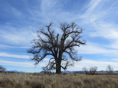 Winter gives this tree a stark beauty that spoke to me. -- Photo by Pat Bean
