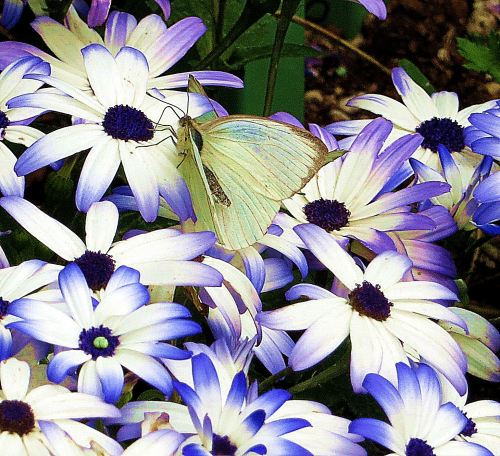 The color purple makes my world better, especially when it trims up some white flowers and helps attract a butterfly.  Photo by Pat Bean