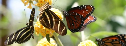 Butterflies -- that's another magical word. -- Photo by Pat Bean