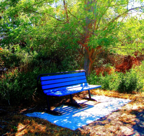 A blue bench for birdwatching at Lake Walcott State Park in Southern Idaho. -- Photo by Pat Bean