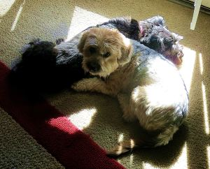 And here they are sharing a spot of sun. I think I would be lonely without my Pepper, and perhaps she would be lonely too if she didn't see Dusty almost every day. -- Photo by Pat Bean