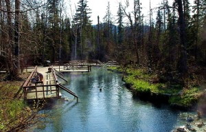 Alpha Pool in Liard River Hot Springs along the Alaskan Highway in British Columbia. -- Wikimedia photo