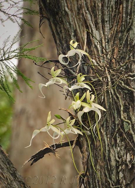 Favorite Places Corkscrew Swamp Sanctuary Pat Bean S Blog